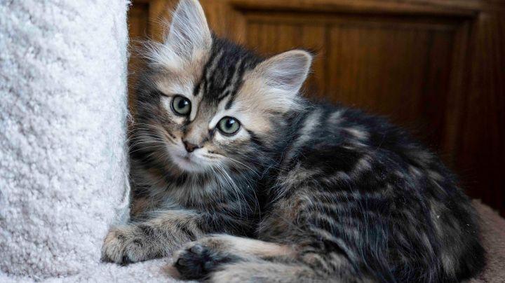 1 kittens 2