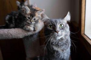 1 kittens