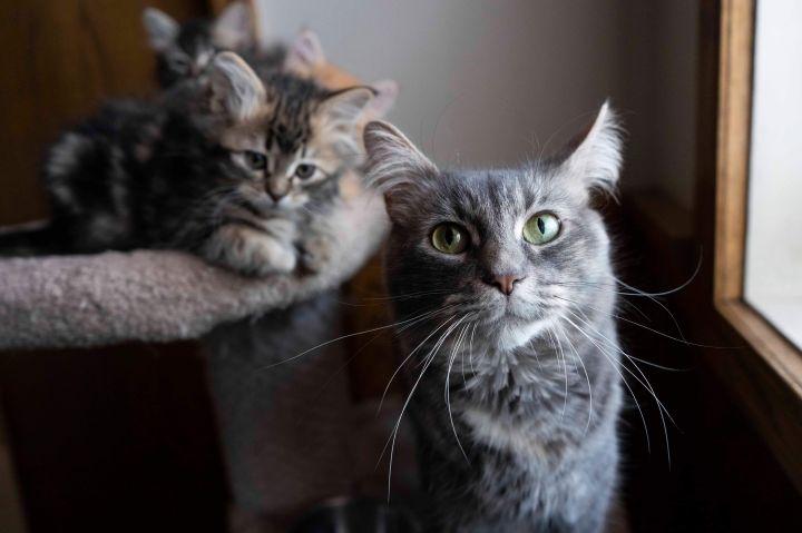 1 kittens 1