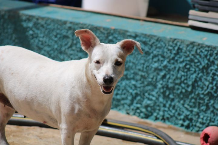 Barbie, an adoptable Mixed Breed in Loiza, PR