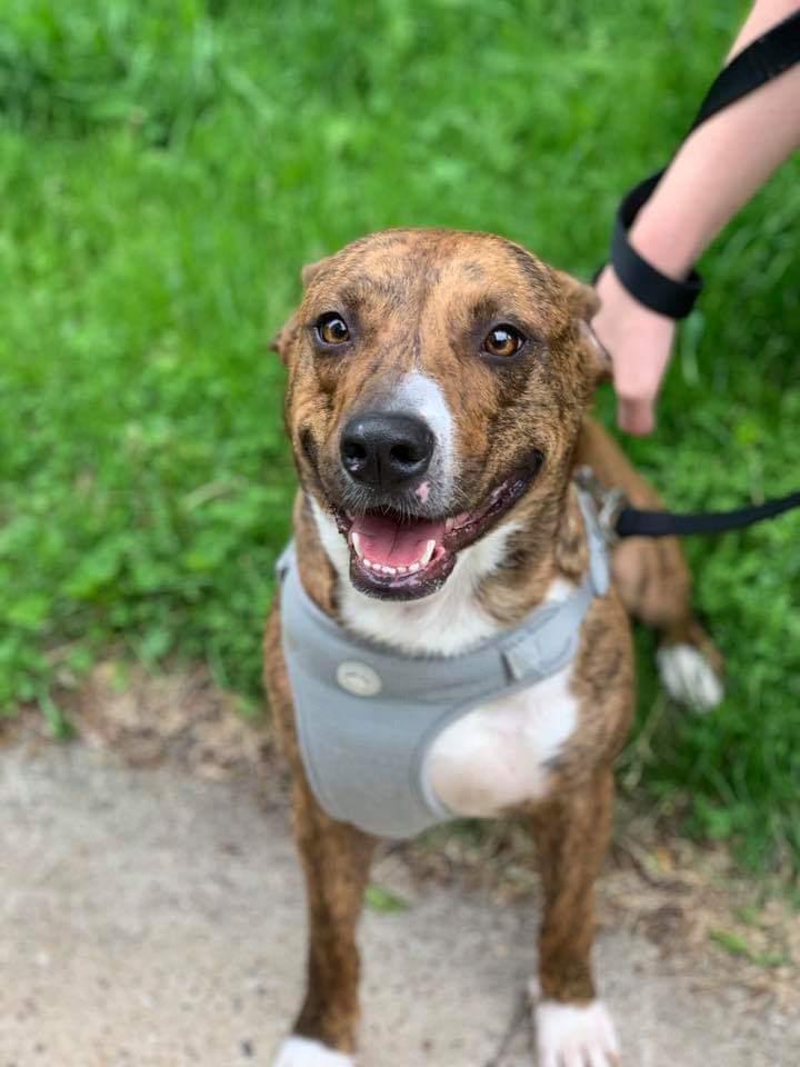 Dog for adoption - Homie - $200, a Corgi Mix in Milwaukee