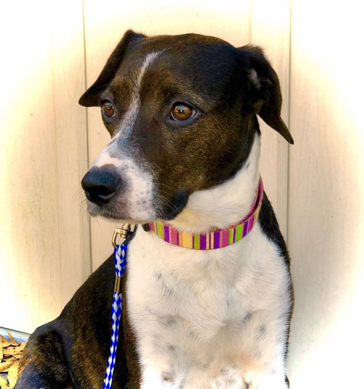 Wendy Mae, an adopted Hound Mix in Pittsboro, NC