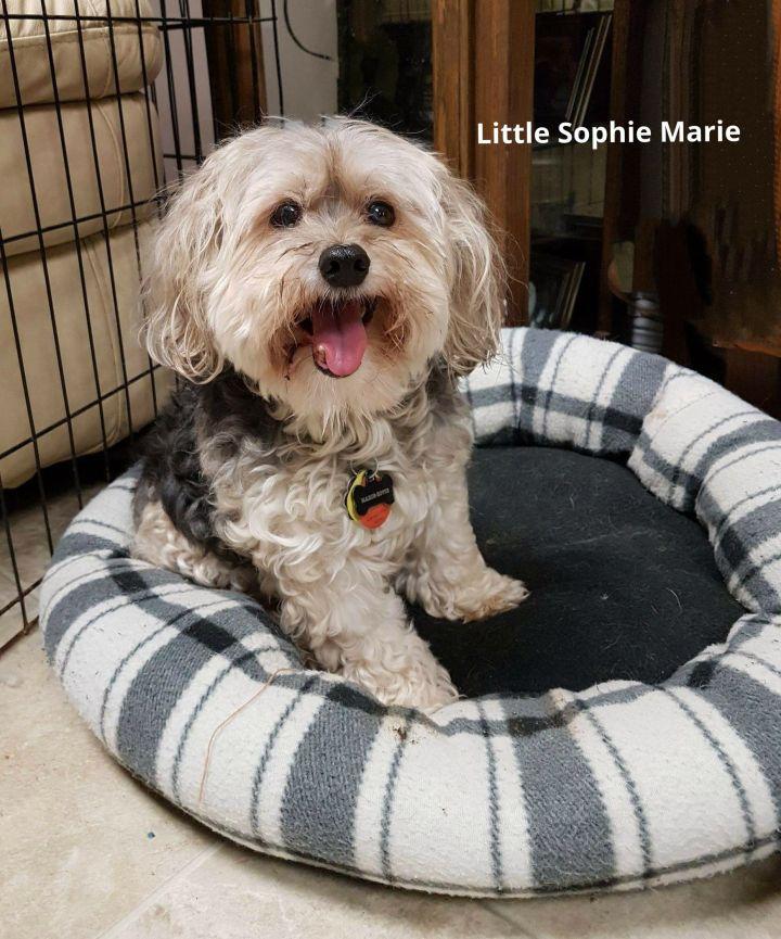 Sophie Marie 1