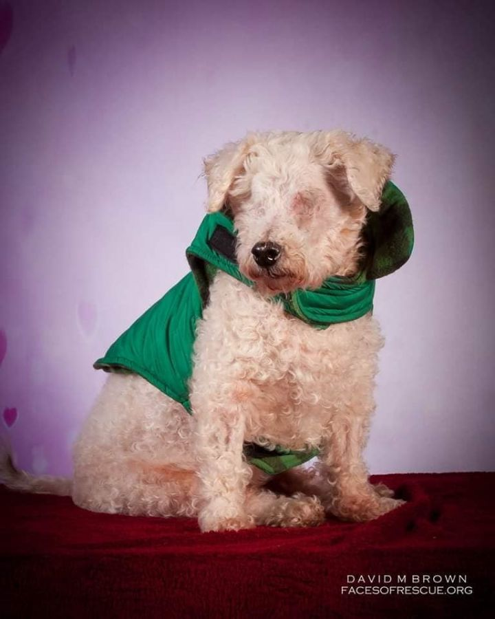 Dog for adoption - Kenny, a Bichon Frise in Westerville, OH