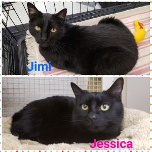 Jimi and Jessica - brother and sister who need hoomans to love!