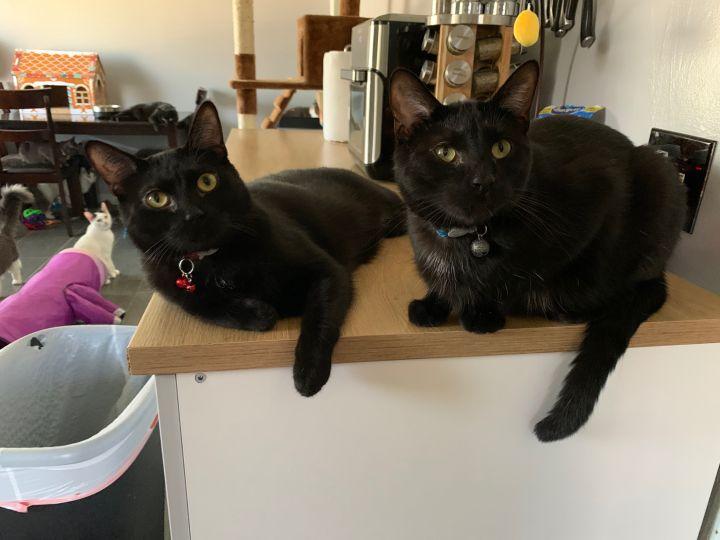 Remus & Sirius 4