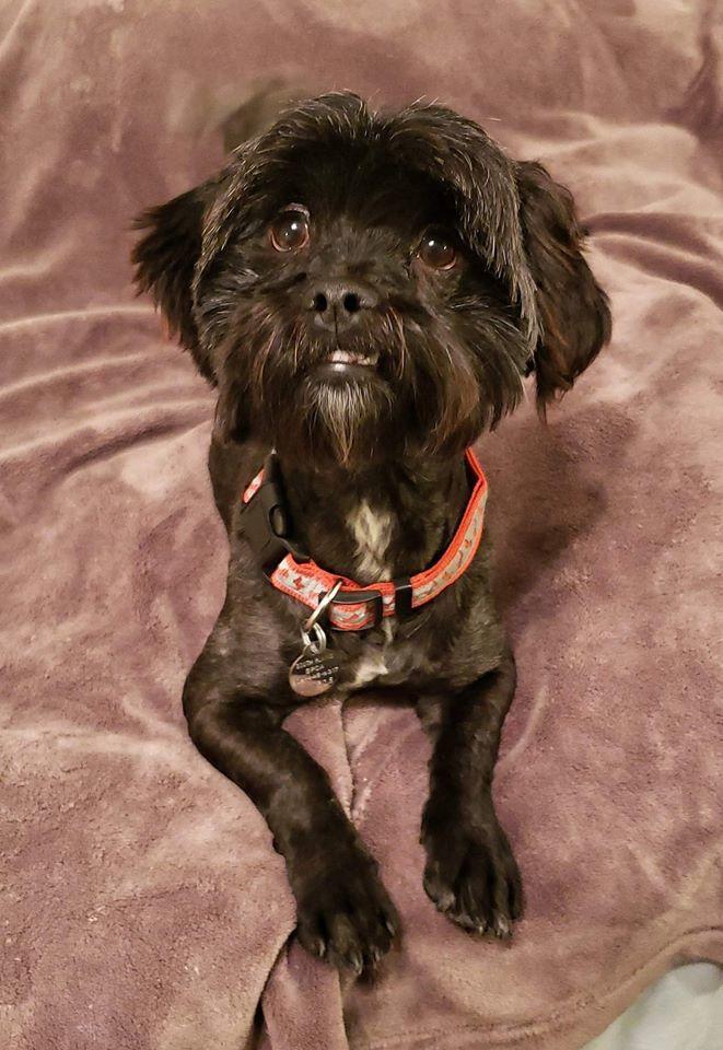 Dog For Adoption Nugget Near Lubbock Tx Petfinder