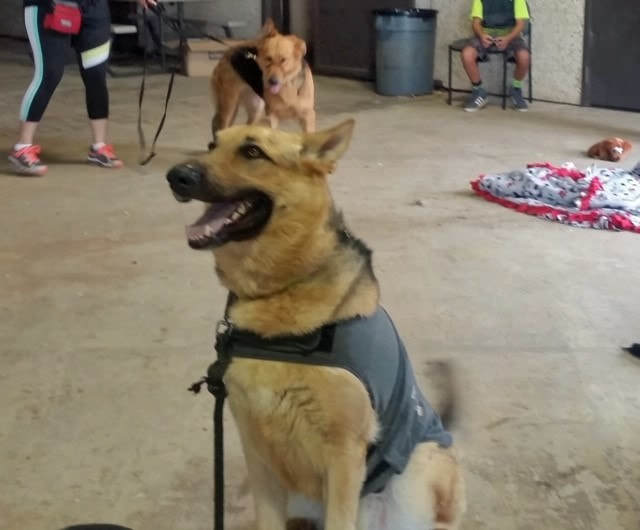 Dog For Adoption Ace Referral Near Dripping Springs Tx Petfinder