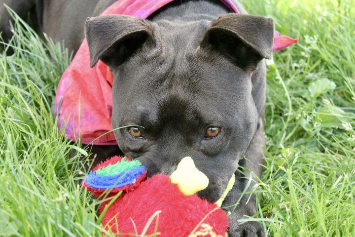 Gerry, an adoptable Terrier Mix in Lake Odessa, MI