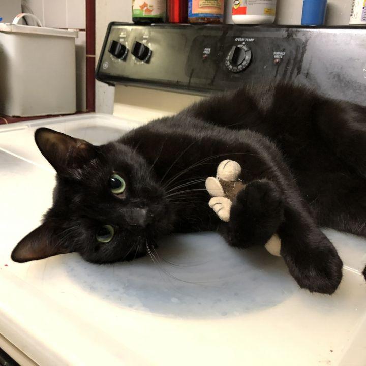 Choco Cat 1