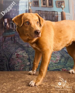 Duggett *Adoption Fee Partially Sponsored*