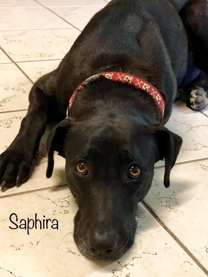 Saphira 1