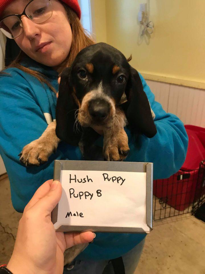 Hush Puppy 1