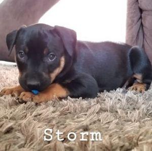 Dogs For Adoption Near Denver Co Petfinder
