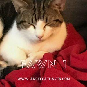 Fawn 1