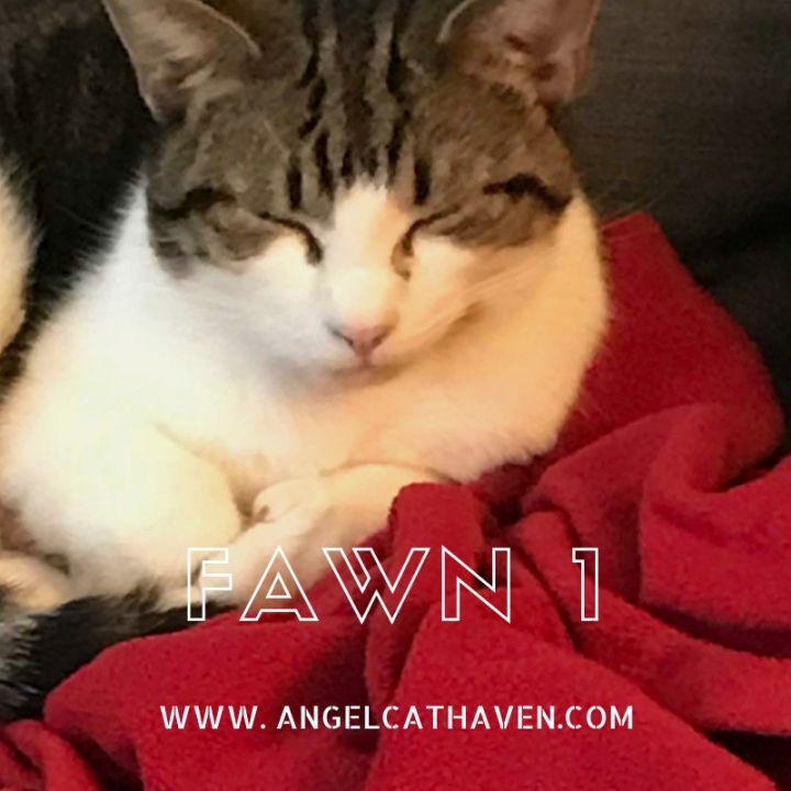 Fawn 1 1