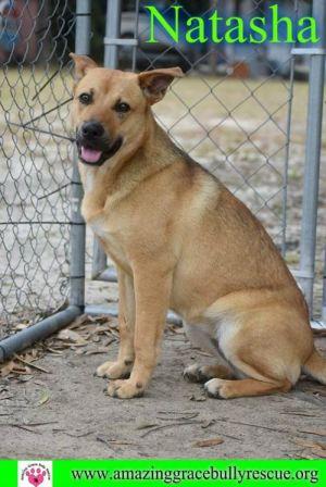 Dog for adoption - Natasha, a Shepherd Mix in Pensacola, FL