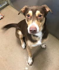 Dog For Adoption Zeus A Husky Mix In Winchester Va Petfinder