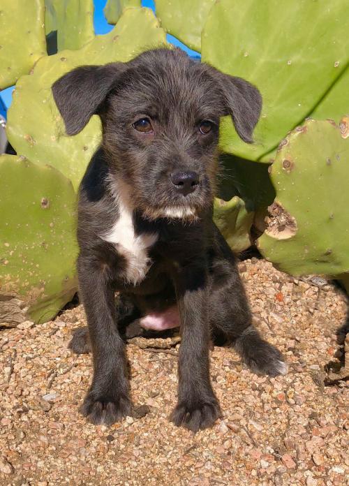 0cb9e3c2178 Dog for Adoption – Bronco, near Helotes, TX | Petfinder