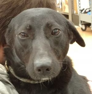 Soka is a one and a half year-old Labrador RetrieverGreyhound mix rescued from Egypt Children thre