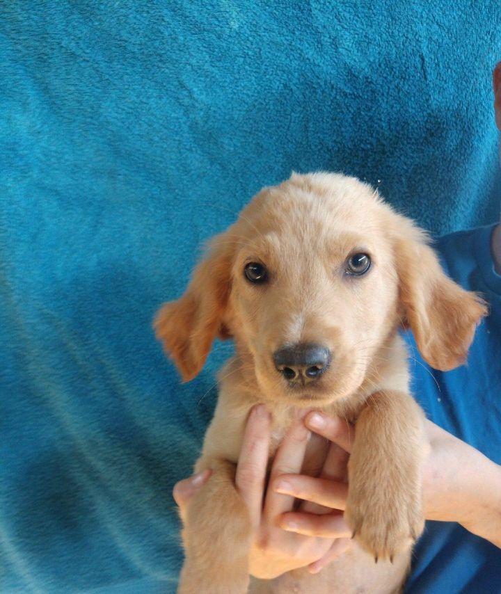 Dog For Adoption Cooper Near Oviedo Fl Petfinder