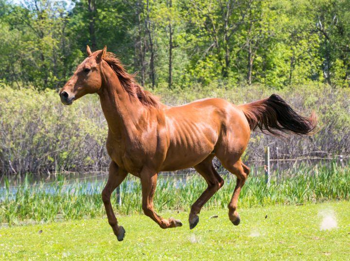 Saber - Pasture Pet Only 3