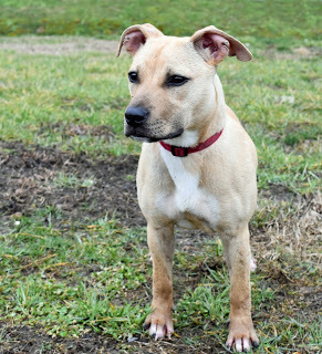 Karma, an adopted Terrier in Marion, KY