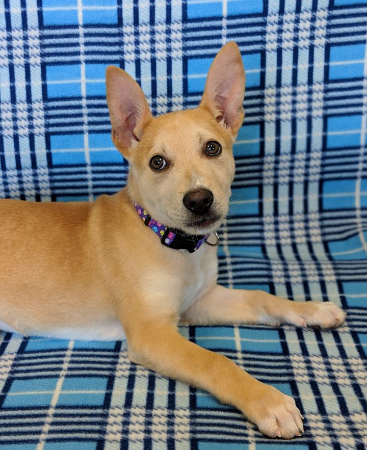 Dog For Adoption Puppies Near Onalaska Wi Petfinder