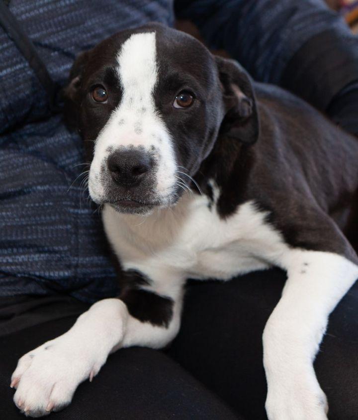 Dog For Adoption Puppies Tree Litter Near Ridgefield Ct