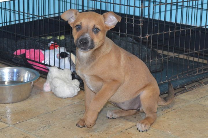 Addison, an adopted Mixed Breed in Milledgeville, GA