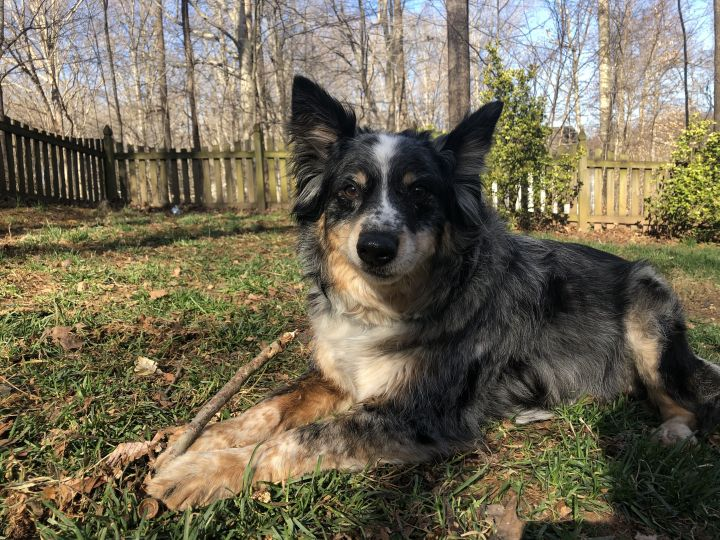 Dover, an adopted Mixed Breed in Fredericksburg, VA