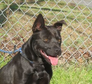 Dogs For Adoption Near Wilmington Nc Petfinder