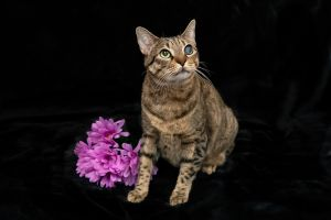 Mao lived her entire life as an indooroutdoor cat That is until her owner had health issues and c