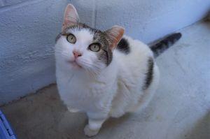 Alexa Tabby Cat