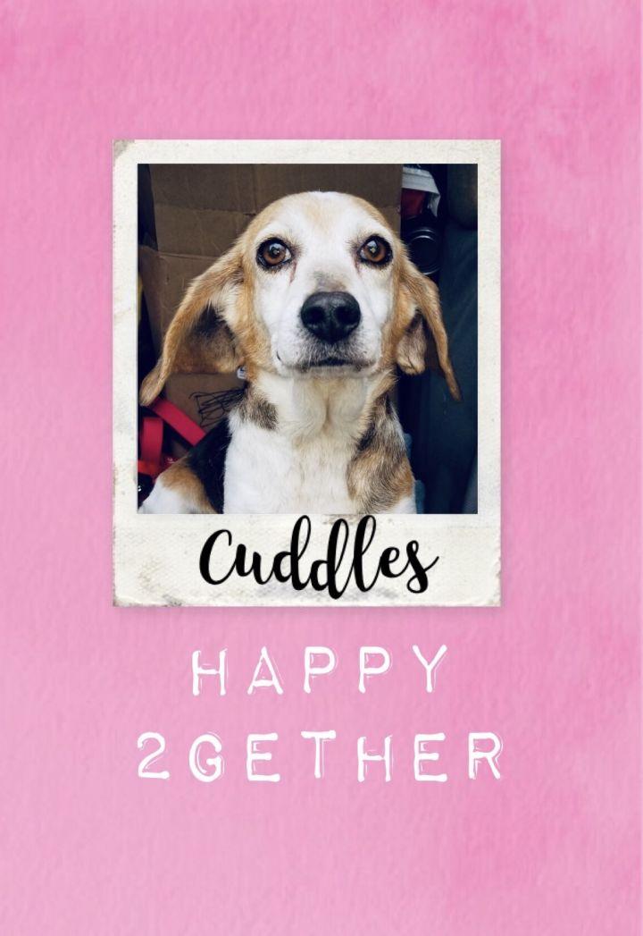Cuddles 1