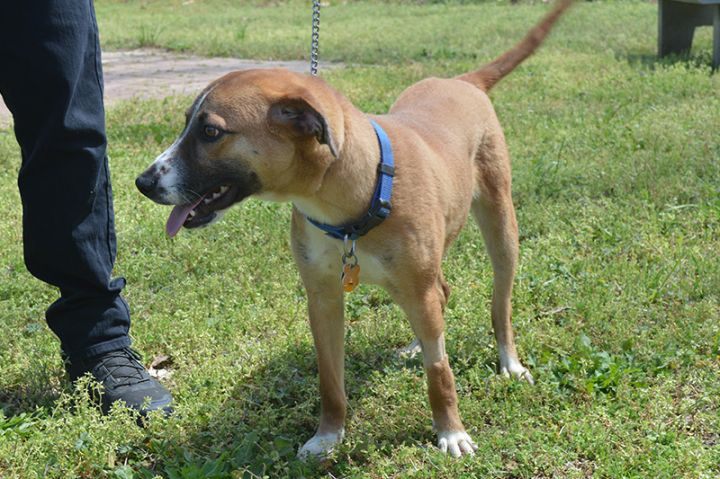 Brickey, an adopted Mixed Breed in Milledgeville, GA