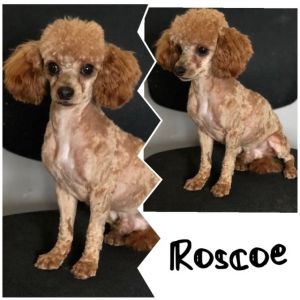 Roscoe a once in a lifetime dog!~