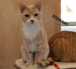 StewartCP