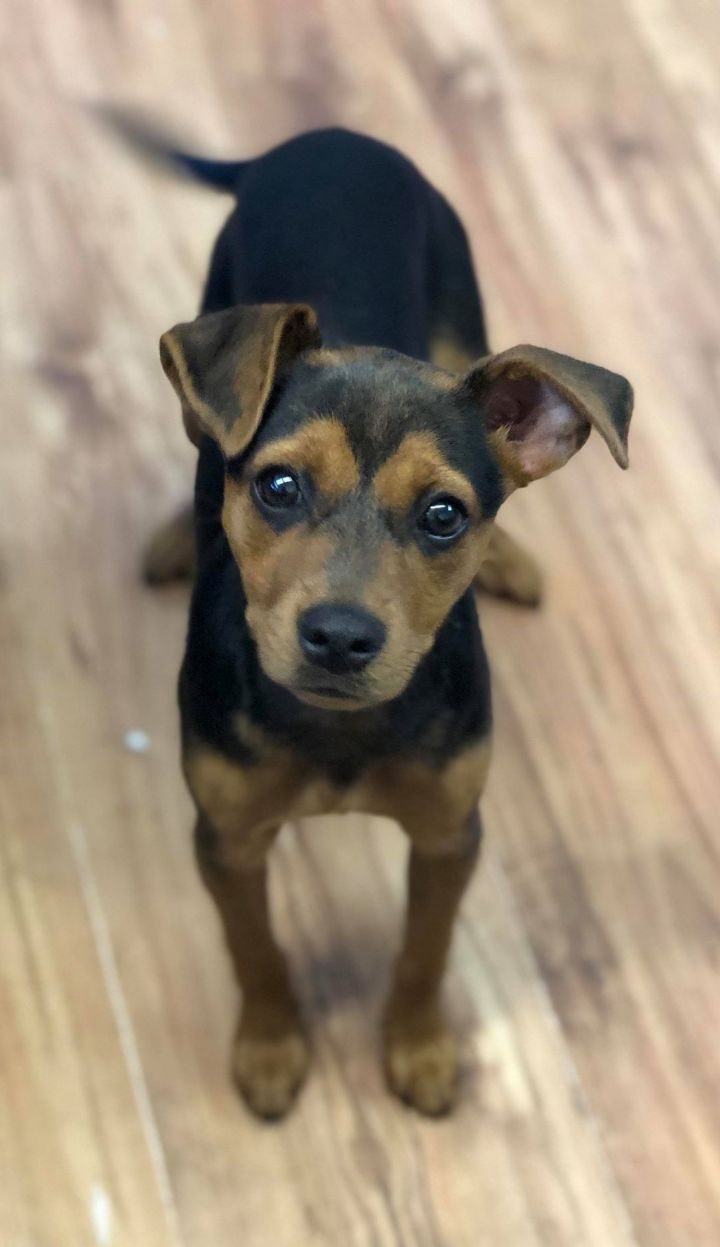 Coco, an adopted Mixed Breed in Northwood, NH
