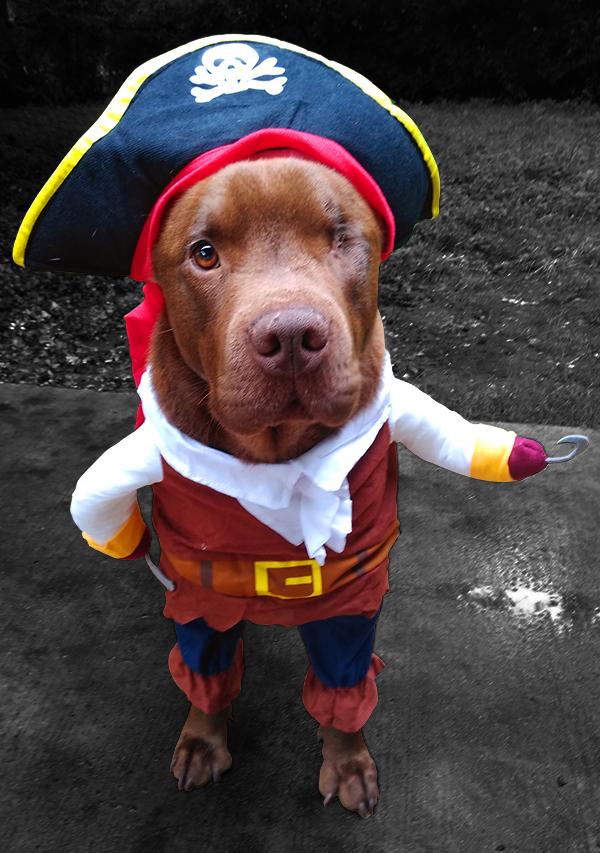 Pirate 2 JuM