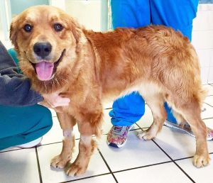 Dogs For Adoption Near Birmingham Al Petfinder