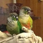 Petrie & Ruby
