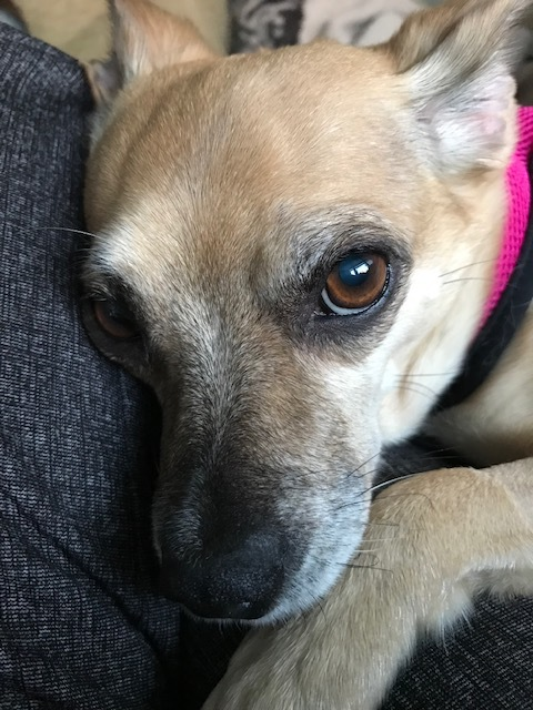 Candy:  Sweet Senior