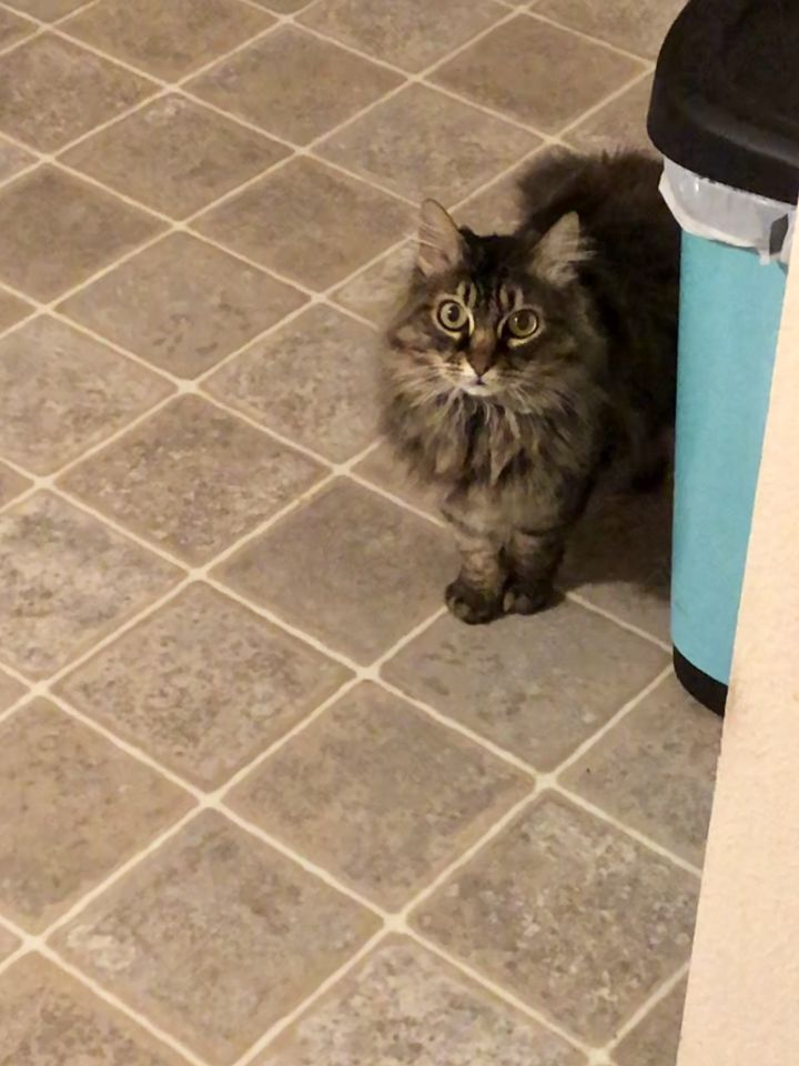 Chloe 5
