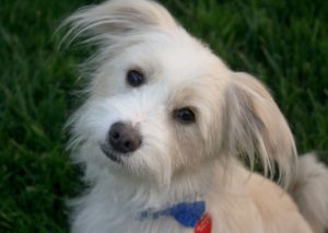 Charlie - Watch my video! I love to play with other dogs!