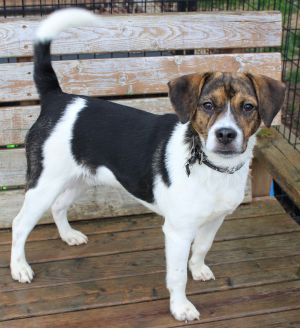Dogs For Adoption Near Kentucky Ky Petfinder