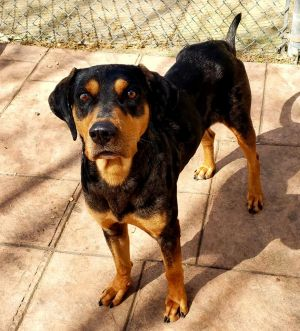 Dogs For Adoption Near Indiana In Petfinder