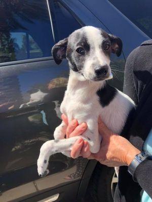 Dogs For Adoption Near Phoenix Az Petfinder