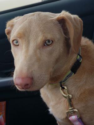 Dogs For Adoption Near Buffalo Ny Petfinder