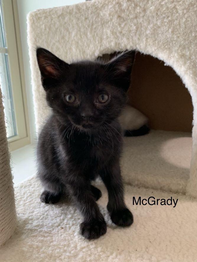 McGrady